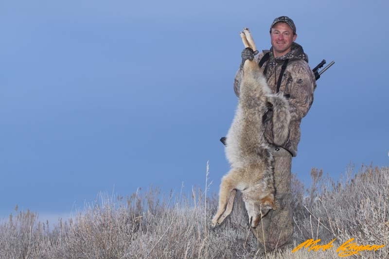 CH301, Mark Kayser with savvy coyote, copyright Mark Kayser EDIT