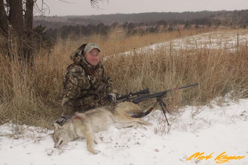 CH442, Mark Kayser with an Eastern coyote, copyright Mark Kayser ed