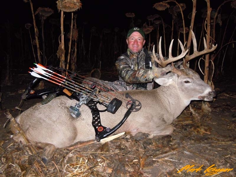 BW1285, Kayser with buck called to the decoy with grunt calls in standing sunflowers, copyright Mark Kayser