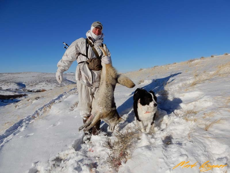 CH579, Mark and Sage with a subzero coyote Sage suckered into holding for a long shot, copyright Mark Kayser